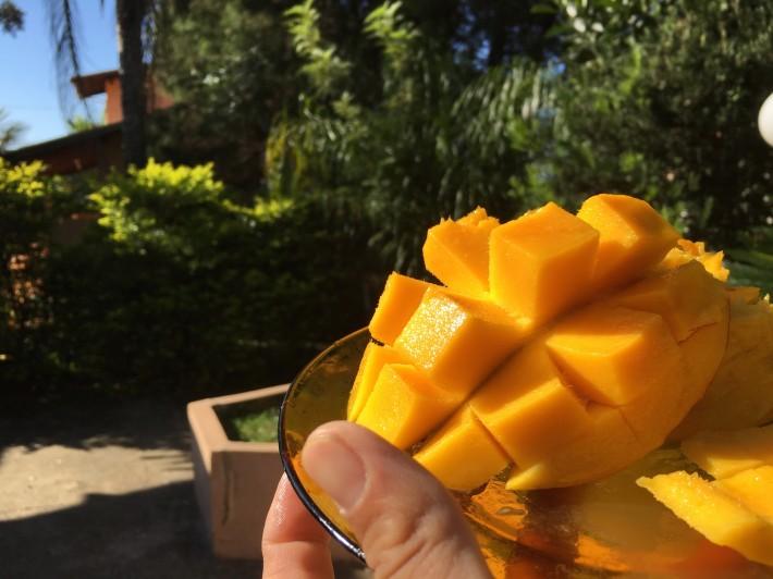 HP326朝のマンゴー